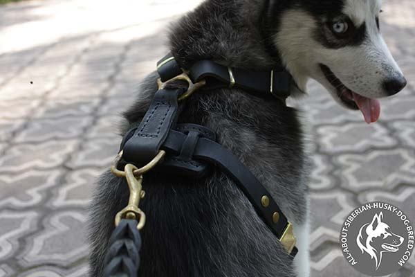 Adjustable Leather Puppy Siberian Husky Harness with Brass Hardware
