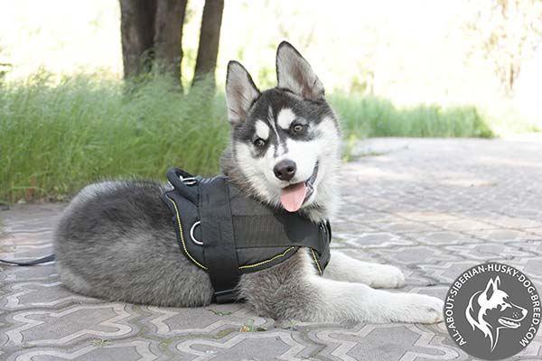 Adjustable Nylon Dog Harness with Soft Control Handle