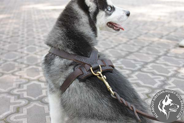 Durable Leather Dog Harness with Carefully Fixed Brass Hardware