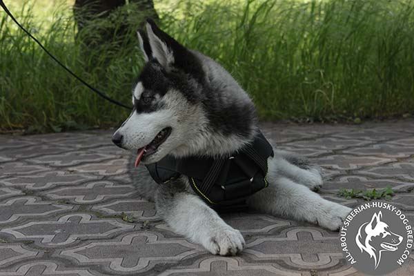 Ergonomic Design Nylon Siberian Husky Harness