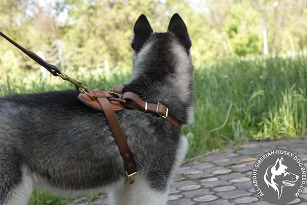 Adjustable Leather Siberian Husky Harness for Comfortable Dog Walking