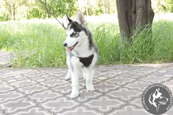 Soft Leather Siberian Husky Harness for Puppies