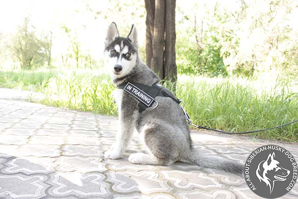Multifunctional Siberian Husky Harness of Lightweight Nylon