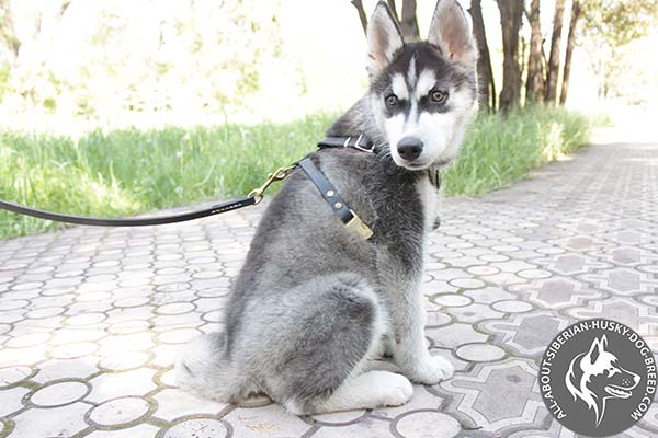 Non-restrictive Design Siberian Husky Harness with Quick Release Buckle