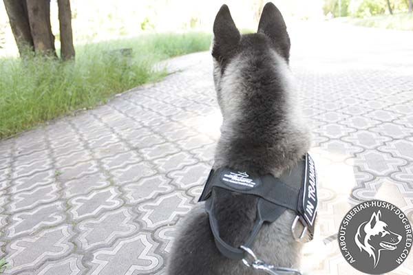 Durable Nylon Siberian Husky Harness with Control Handle
