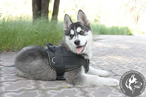 Nylon Siberian Husky Harness for Everyday Activities