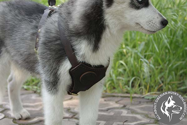 Superior Quality Soft Padded Leather Siberian Husky Harness