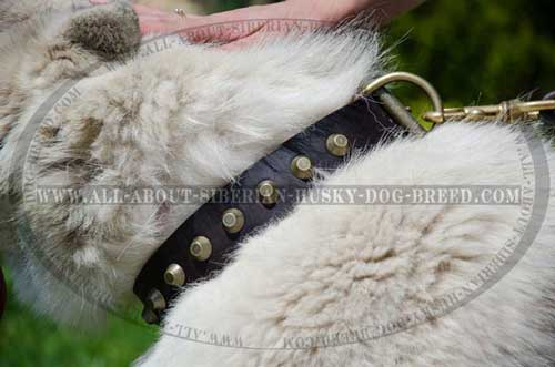 Extremely Beautiful Leather Siberian Husky Item