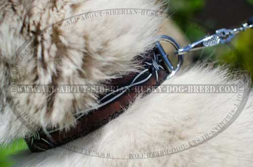 We present you extremely comfortable Siberian Husky leather collar