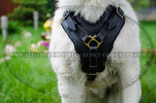 Everyday dog harness