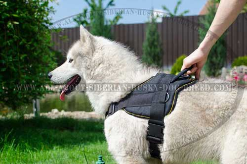 Extremely durable tool for your active Siberian Husky