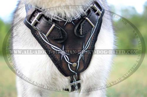 Comfortable soft leather harness for Siberian Husky