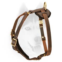 All weather leather harness for Siberian Husky