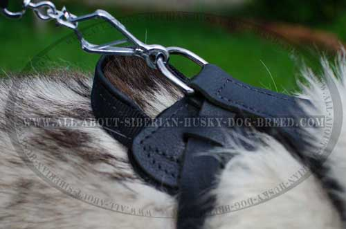 High quality leather harness