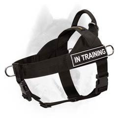 Best identification harness for Siberian Husky