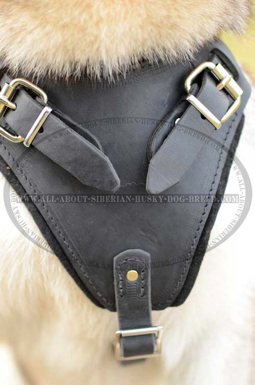 Exclusive design harness for your Siberian Husky