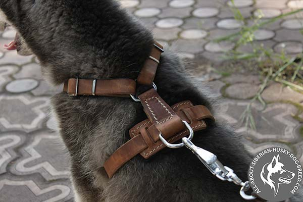 Studded Siberian Husky Harness with O-ring for Leash Attachment