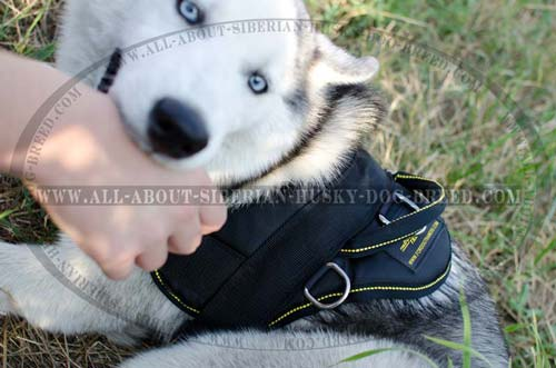 Exclusive nylon harness for Siberian Husky