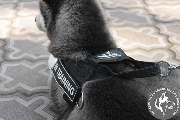 Universal Dog Harness with Carefully Welded  Hardware