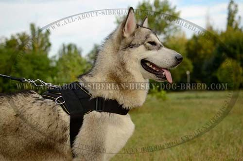 Nylon Dog Harness Easy Adjustable for Siberian Husky