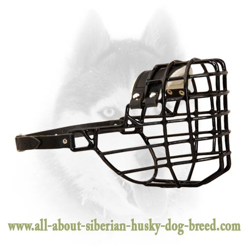 Winter wire basket muzzle for Siberian Husky