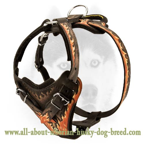 Extra comfort stylish leather harness for your Siberian Husky