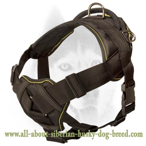 Super safe new design nylon harness for more comfort of your Siberian Husky
