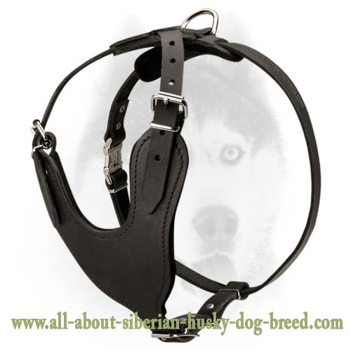 Simple and comfort design leather harness for Siberian Husky