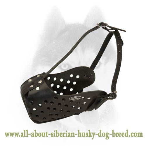 Agitation/Attack Training Leather Muzzle for Siberian Husky
