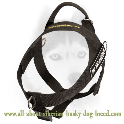 Nylon harness for Siberian Husky with ID-patches