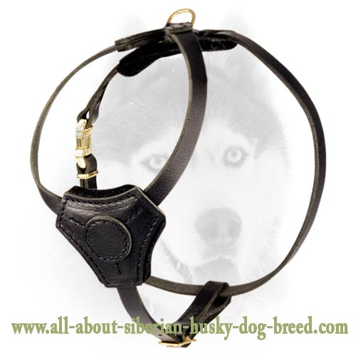 Super light weight equipment for Siberian Husky puppy with style