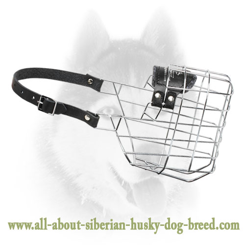 'The Silencer' Light weight comfortable wire basket muzzle for your Siberian Husky