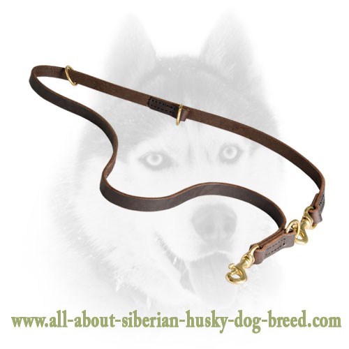 Brass Snap Hooks for Siberian Husky Leash