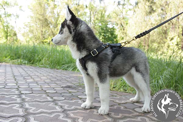 Siberian Husky leather leash of genuine materials with handset decoration for daily activity