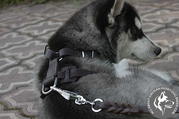 Siberian Husky leather leash with durable nickel plated hardware for perfect control