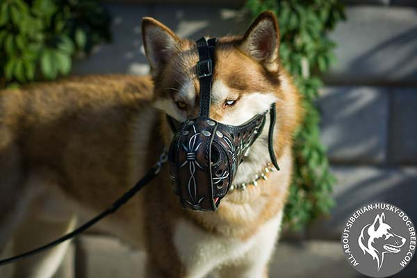 Padded Nose Leather Siberian Husky Muzzle with Barbed Wire Painting