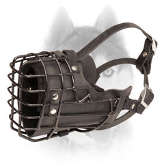 Easy adjustable leather padded Siberian Husky muzzle