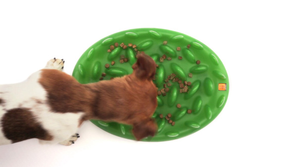 Interactive Siberian Husky pet feeder