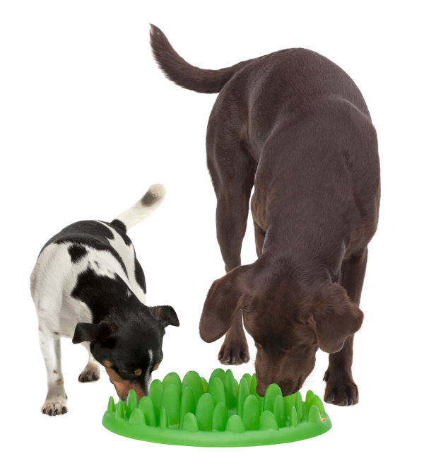 Plastic dog feeder for two dogs