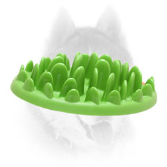Siberian Husky pet feeder for healthy meal
