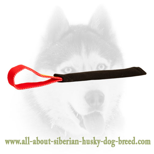 French Linen Siberian Husky bite tug for puppies