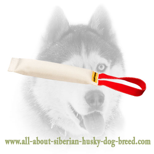 Siberian Husky Puppy Bite Tug With a Comfy Handle