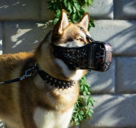 Purchasing the Right Dog Muzzle for your Dog